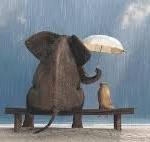 compassione elefante